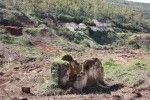Complejo minero San Nicolás 1
